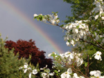 Digital photo of Pennsylvania mountain laurel with rainbow representing public relations services.