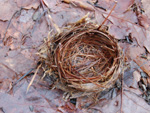 Digital project management photo of a nest near Shohola PA from Heron's Eye Communications stock photo archive of nature images.