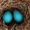 Photo of two robin eggs in a nest in Pike County, PA by photographer Sandy Long.