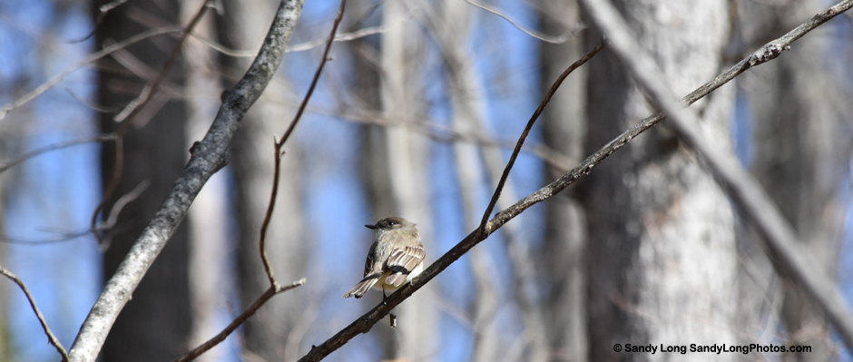 Photo by Sandy Long of a small bird in a tree.