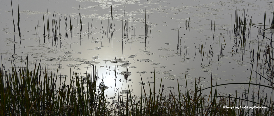 Photo by Sandy Long of a winter pond at dusk in Pike County, PA.