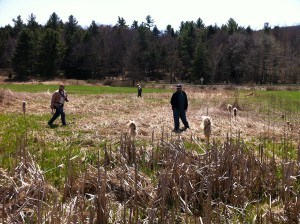 Photo of event organizers exploring a fen that is part of the scenic property where the first Upper Delaware BioBlitz will be held on June 29, 2013 in northern Wayne County, PA.