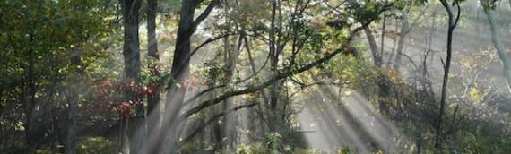 Shenandoah National Park's Wild Beauty