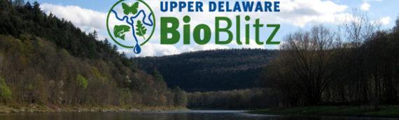 BioBlitz Beckons Shutterbugs