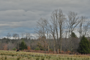 A November photograph of Lemons Brook Farm by Sandy Long. Long was featured on WJFF Radio's Farm and Country with Rosie Starr.