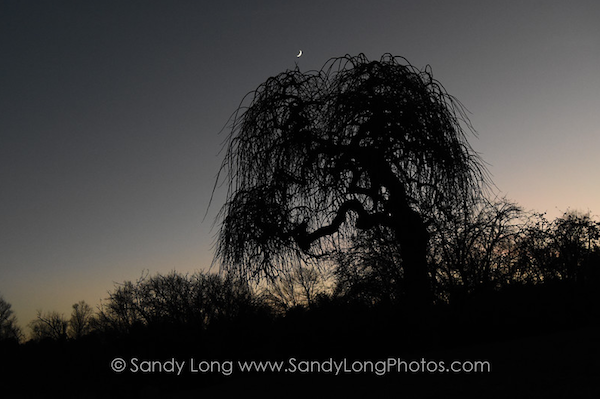 The poet tree at Lemons Brook Farm photogarohed by artist in residence Sandy Long, which was featured om WJFF Radio's Farm and Country with Rosie Starr.