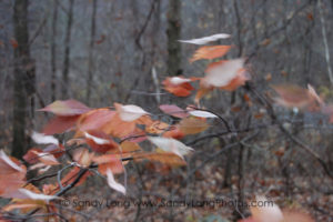 A photograph of blowy leaves by Sandy Long, which will appear in her Portal of Place digital exhibit at DENiZEN in Barryville, NY.