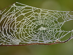 Photo by Sandy Long of a spiderweb to illustrate Heron's Eye Communications social media management services.