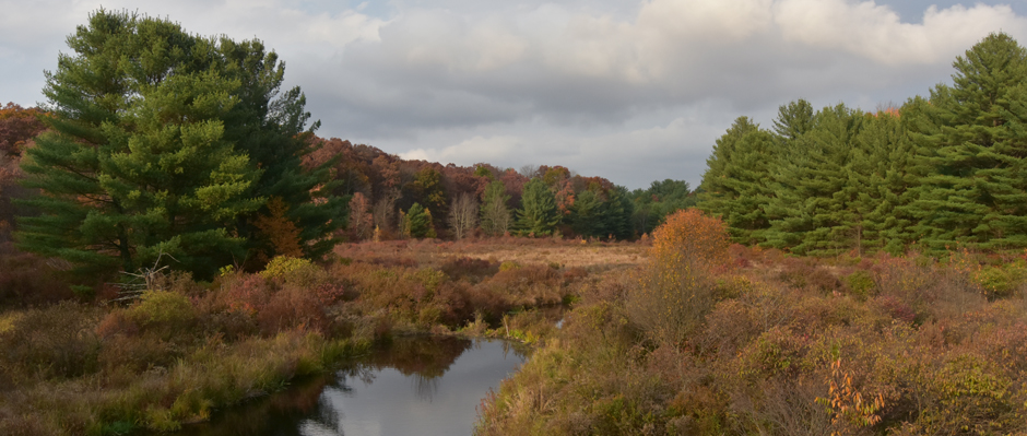 A photo of a Pike County PA wetland area in autumn by Sandy Long.