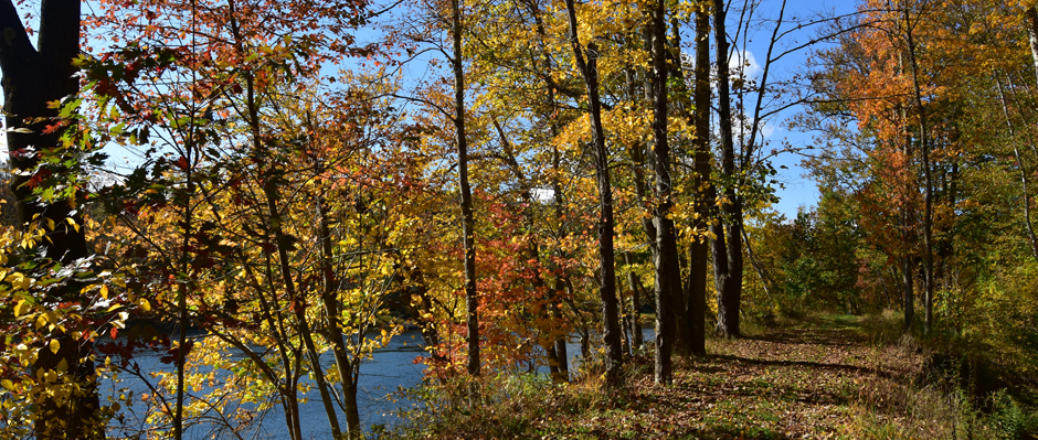 A photo by Sandy Long of a towpath trail along the Lackawaxen River.