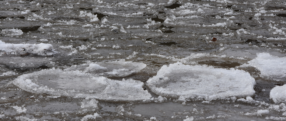 Photo of pancake ice by Sandy Long.